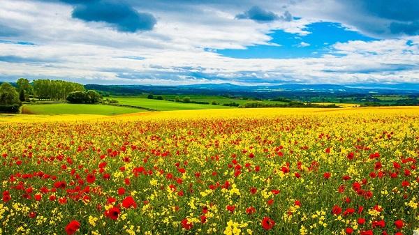 Wallpaper Flowers Spring Field 1920 X 1080 Full Hd Camino